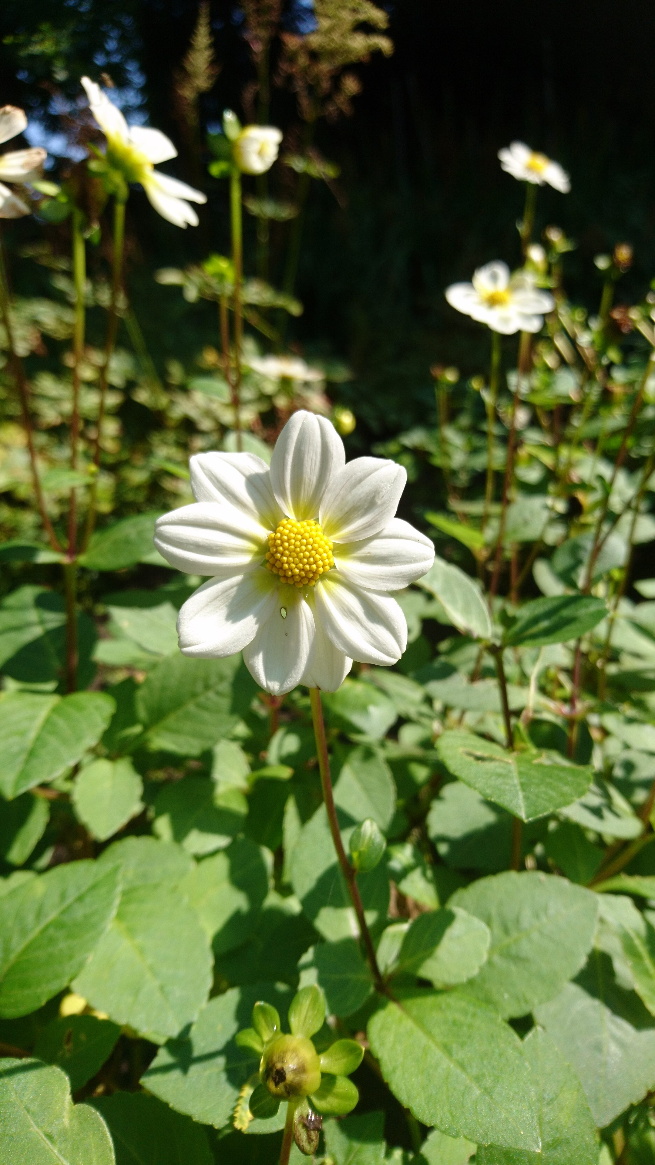 De Floralia – Floralia Park